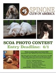 Photo Contest tips for Voting