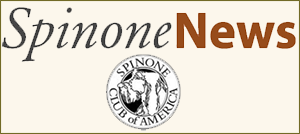 Spinone News